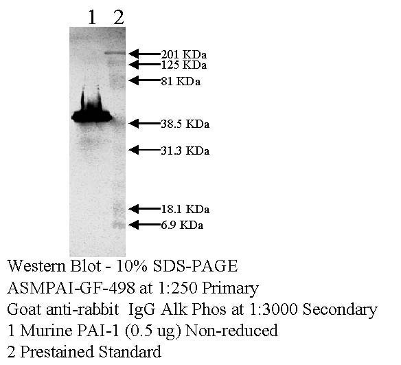 Rabbit anti mouse PAI-1 IgG fraction