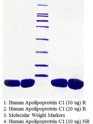 Apolipoprotein C1, Human Plasma, VLDL