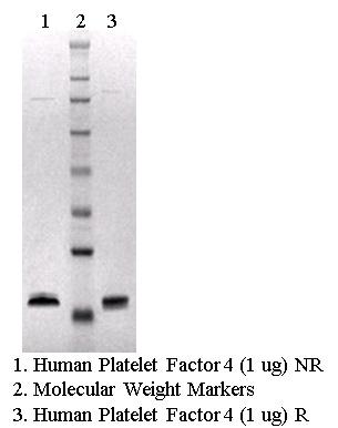 Human Platelet Factor 4