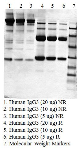 IgG3, Human Plasma