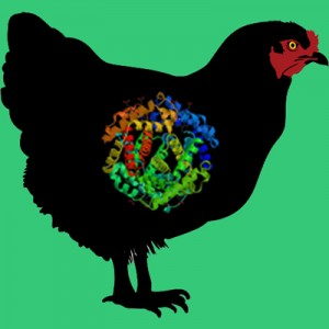 Chicken plasminogen