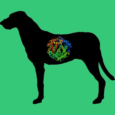 Dog Prorenin, C-terminal 8x His tag