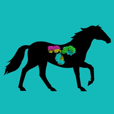 Horse IgG, Protein G Purified