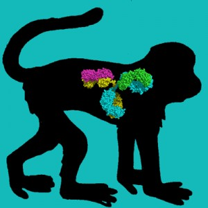 Cyno Monkey IgG, Protein A Purified