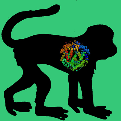 Cyno Monkey PAI-1 (wild type latent fraction)
