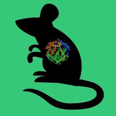 Mouse pancreatic elastase