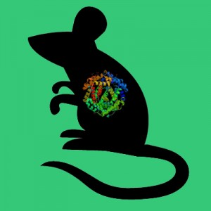 Active mouse tPA, two chain recombinant