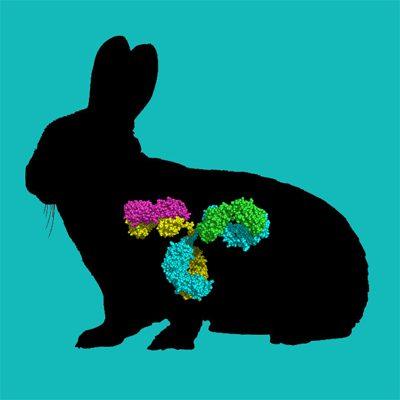 FITC labeled rabbit IgG