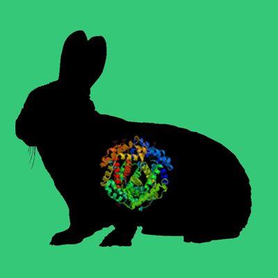 Rabbit plasminogen