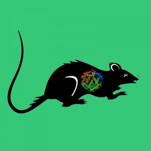Rat PAI-1 (stable mutant)