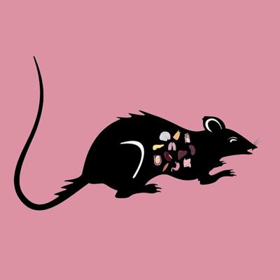Rat Liver Tissue Lysate