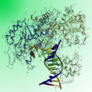 DNA polymerase green dye