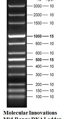 Molecular Innovations Mid Range DNA Ladder