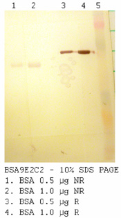 Anti BSA, Clone 9E2C2