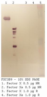 Anti Human Factor X, Clone 3C8B9