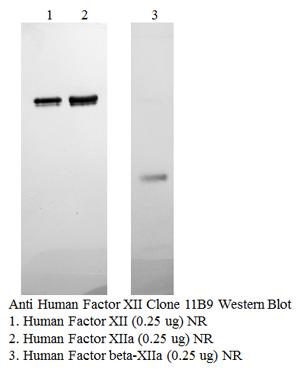 Anti Human Factor XII, Clone 11B9