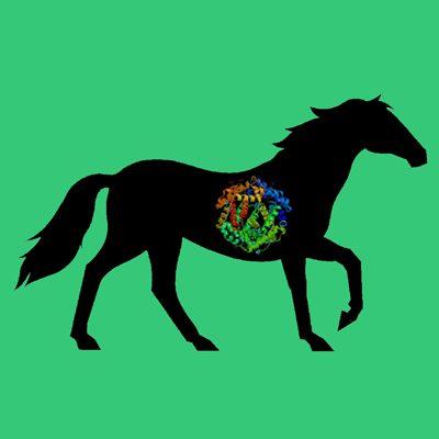 Equine (horse) plasminogen