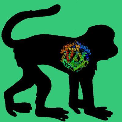 Cyno Monkey PAI-1 (wild type active fraction)
