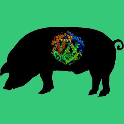 Active porcine tPA, recombinant