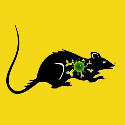 Rabbit anti rat PAI-1 IgG fraction, fluorescein labeled