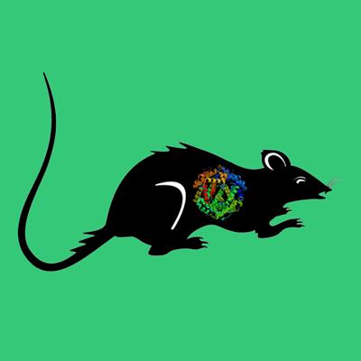 Rat PAI-1 (Alexa Fluor 488 labeled wild type latent form)