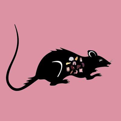 Rat Lung Tissue Lysate